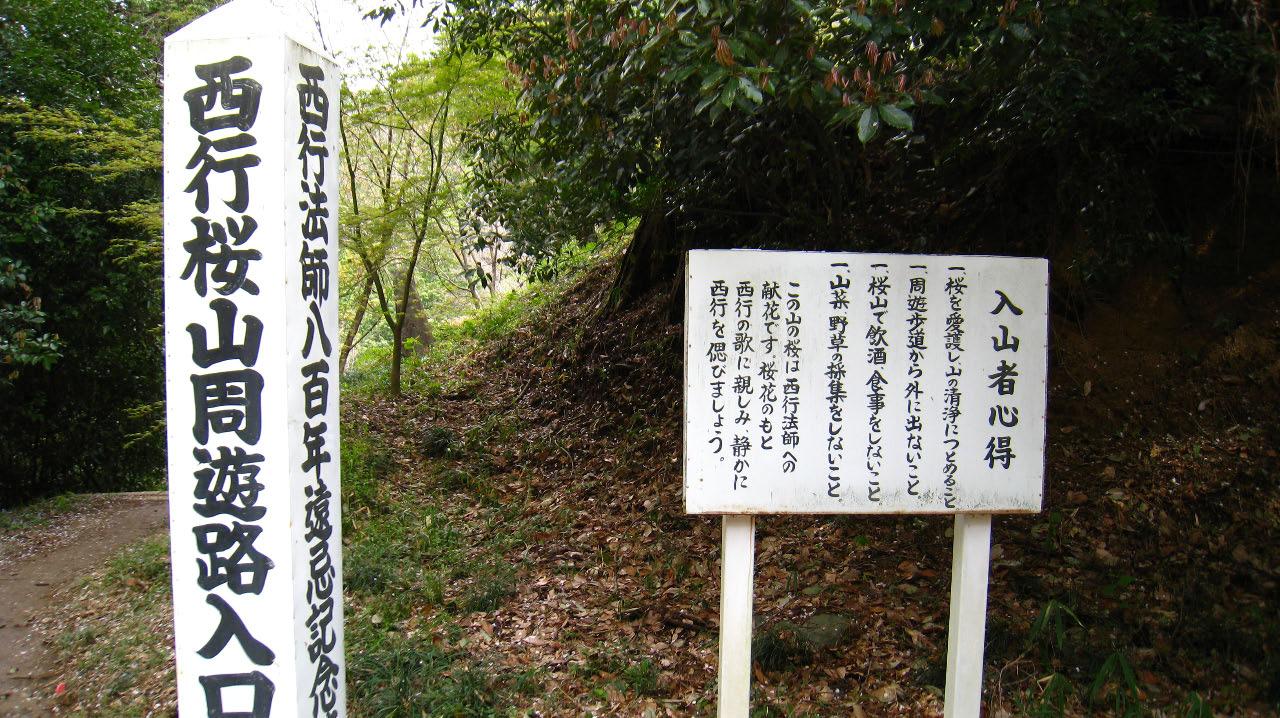 西行桜山周遊路へ
